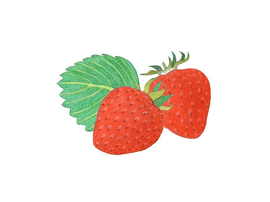 苺の水彩イラスト