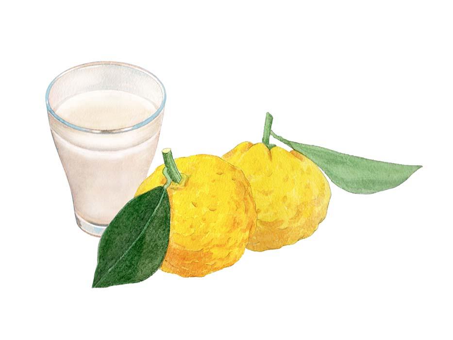 甘酒と柚子の水彩イラスト