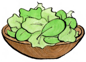 サラダのドローイングイラスト