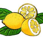 original works  ペン画 レモンとサラダとパン