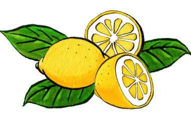 レモンのドローイングイラスト
