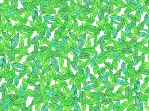 キリン生茶のHANAMIイベント風呂敷の水彩パターン茶葉イラスト