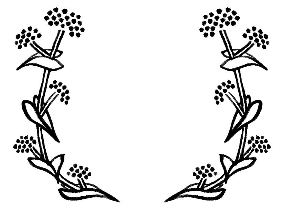 そばの花のドローイングイラスト