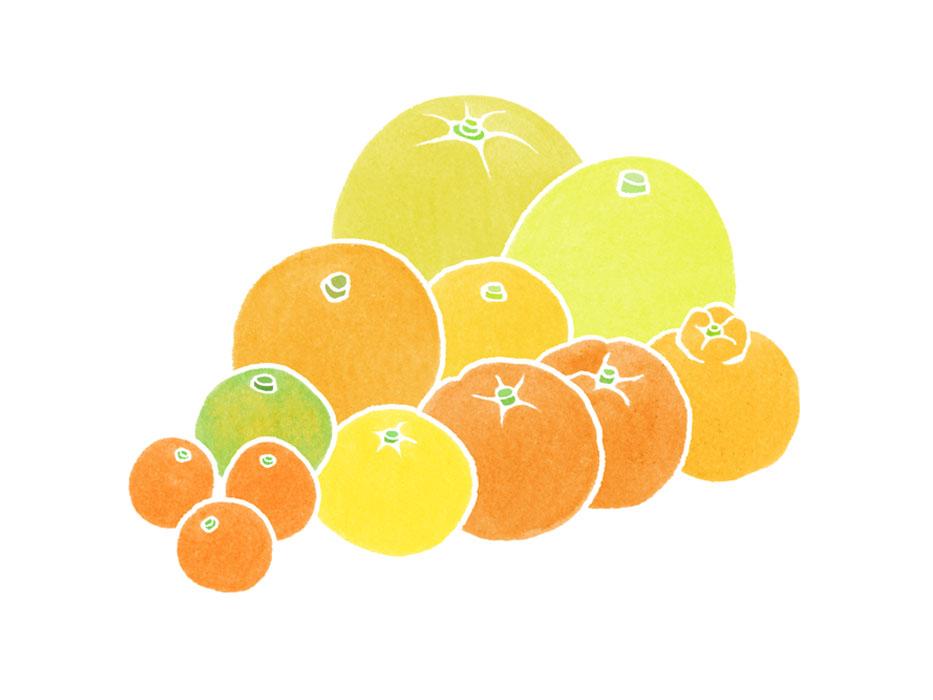 熊本の柑橘イラスト