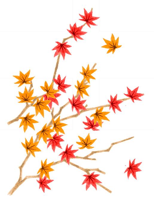 赤紅葉の水彩イラスト