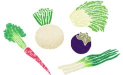 京野菜の和風イラスト