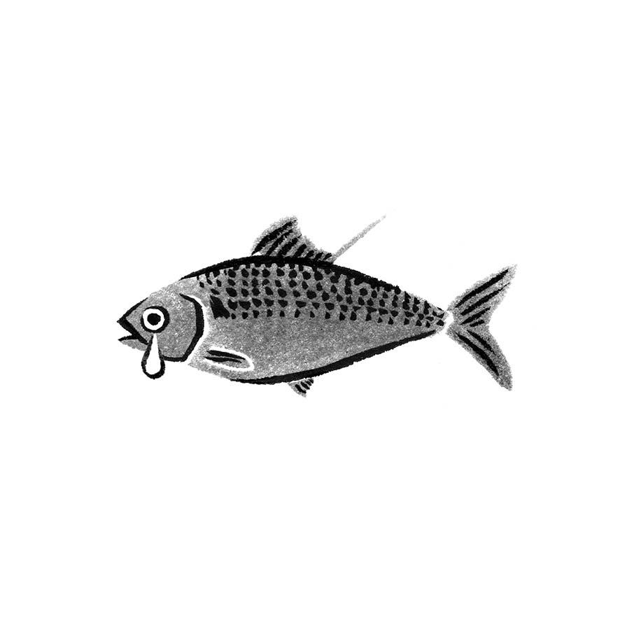 danchuに寄稿した水墨画の魚のイラストの小肌