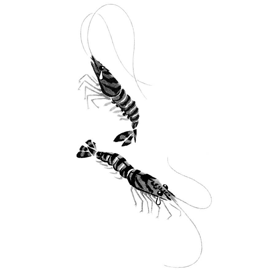 danchuに寄稿した水墨画の魚のイラストの車海老