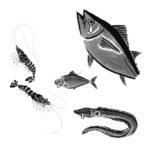 雑誌danchu1月号「町の鮨」 コラム魚イラスト