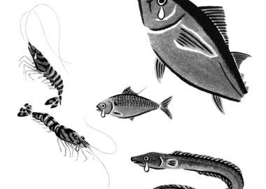 danchuに寄稿した水墨画の魚のイラスト