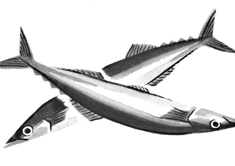 モノクロの水彩風さんまイラスト