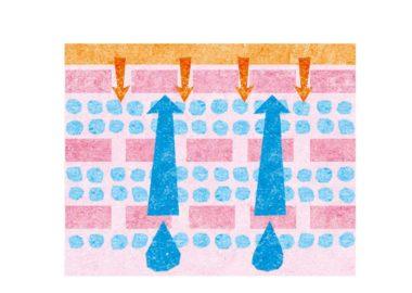 肌の断面の水彩イラスト