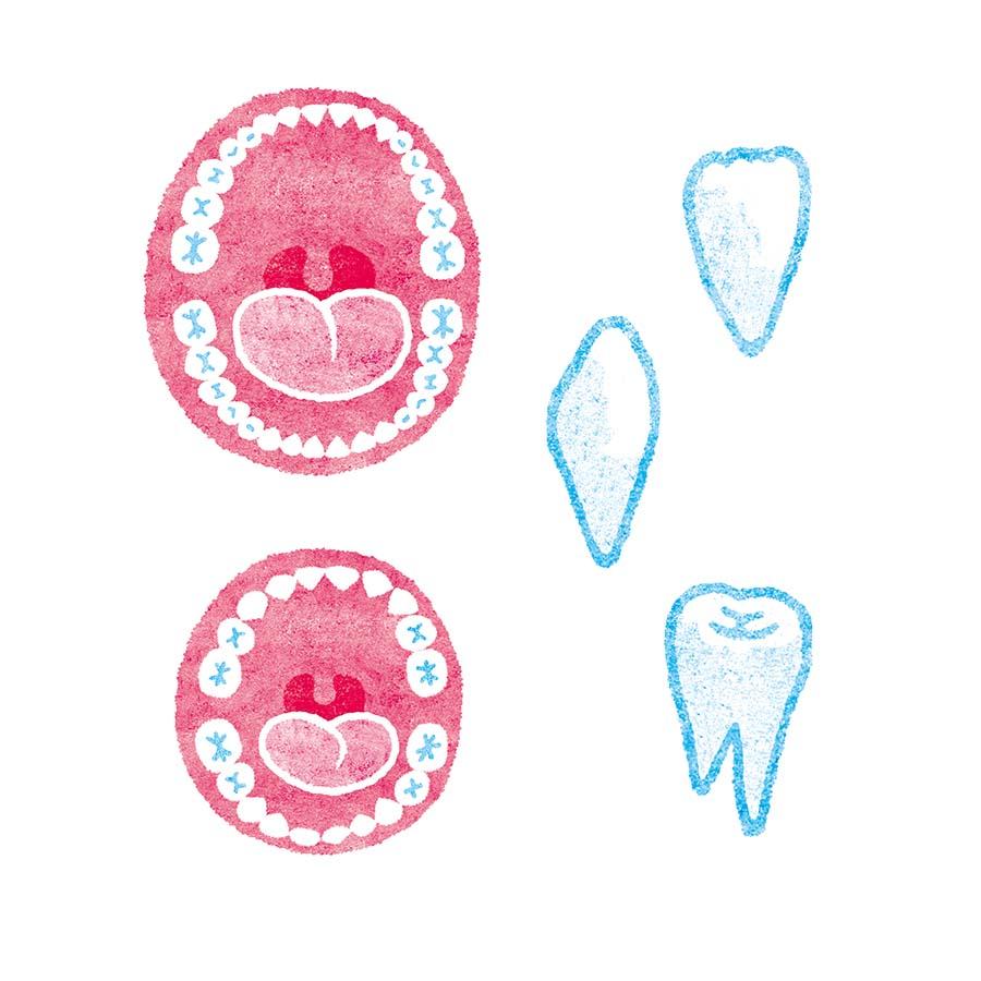大人の歯、子供の歯の水彩イラスト