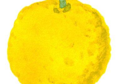 柚子の水彩イラスト