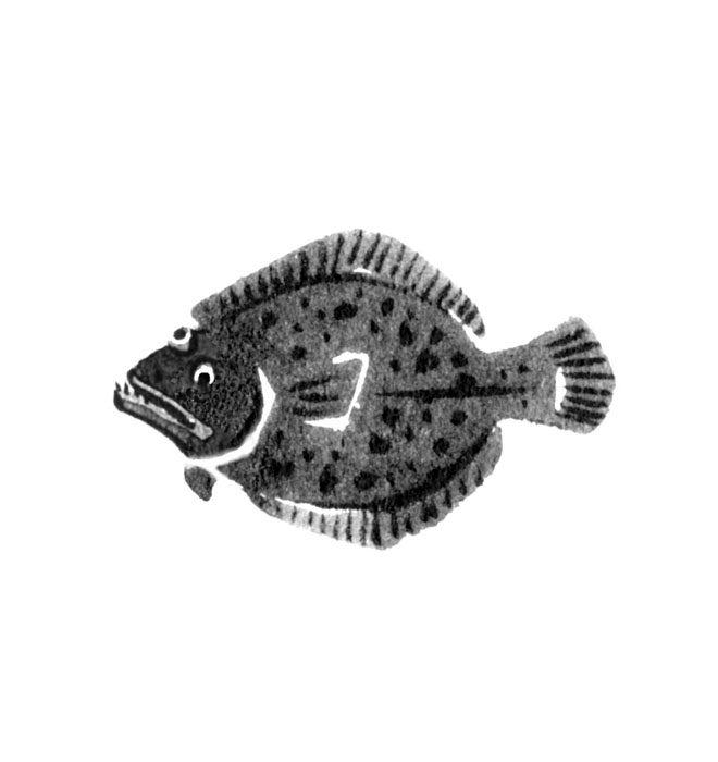 魚のカレイの水墨画風イラスト