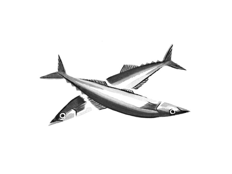 魚のさんまの水墨画風イラスト